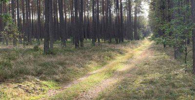 Dydaktyczna ścieżka Leśna Bartlewianka
