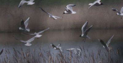 Ostoja Ptactwa wodnego jezioro Kochanka