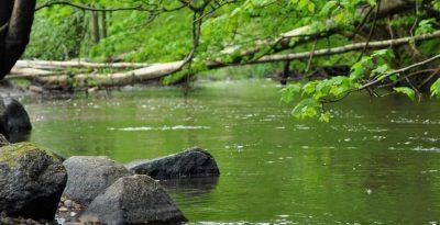 rzeka Wierzyca